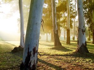289581_sunrise_trees